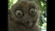 Маки - Погледни Ме В Очите !