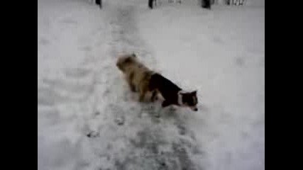 Кучешка Поза