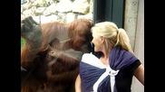 Орангутан иска да види малкото бебче!