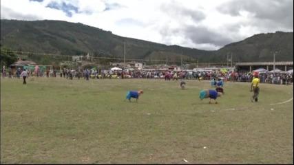В Колумбия организираха футболен мач между овце