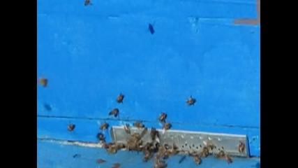 мойте пчели