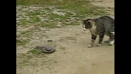 Коте vs Змия