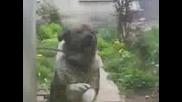 Много смешно куче задължително го гледайте :d