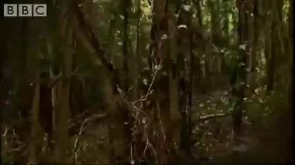 Сокол скитник - най - бързата птица и Голям Ястреб - царят на меневрите!