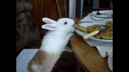 Зайче яде панирани калмари