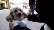 Кученце на име Барби се мисли за човек, върви на два крака