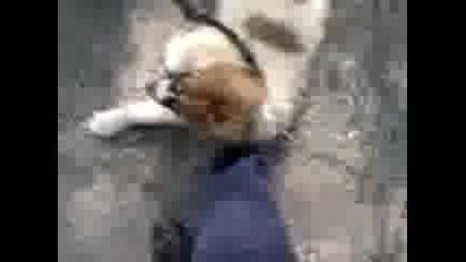 19.04.2008 - Куче6ка Изложба В плевен