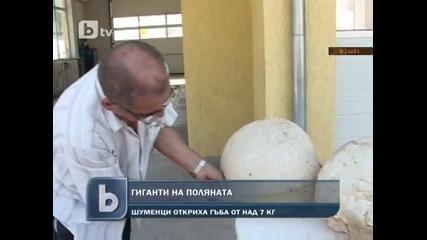Нашенец откъсна 9 кг гъба-гигант в Шуменско