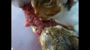 Три котки в битка за пържола!