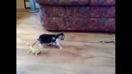 Котка срещу гущер. Смях
