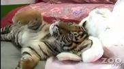 Сладко тигърче 4
