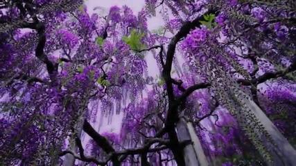Японски парк с цветя