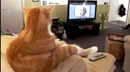 Котка гледа телевизия:)