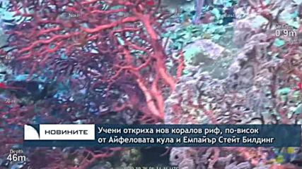 Учени откриха нов коралов риф, по висок от Aйфеловата кула и Емпайър Стейт Билдинг