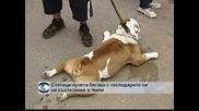 Стотици кучета бягаха с господарите си на състезание в Чили
