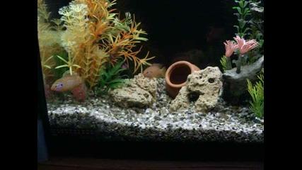 аквариум Асен