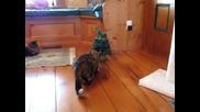 Любопитството убило котката. (смях)