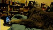 Котка c телефон