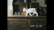 Компилация - Забавни Котки! Гледай Задължително ! :D