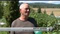 Собственик на оранжерия отгледа 100 тикви от 1 семка
