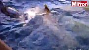 Палав делфин скрои лют номер на руса кака докато го снима !