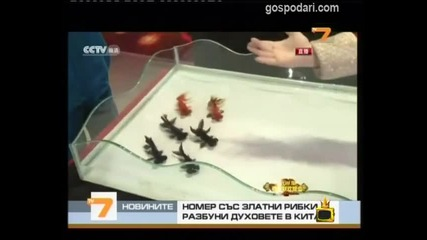 Господари на ефира 11.03.2011 За животните с любов