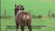 Кон срещу десетки мъже
