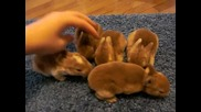 Малки сладури - Baby Mini Rex Rabbits