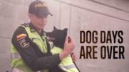 Pereira's Canine Guardians