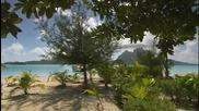 Enya - Wild Child & Caribbean Blue Tropical