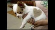 Кученце, Се Е Родило Със Сърчице На Гърба!!