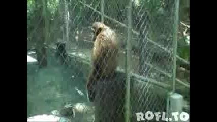 Маймуна се мисли за Шумахер