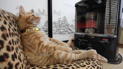 Когато навън е студено, най-хубаво е у дома пред печката