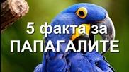 5 Любопитни факта за папагалите!
