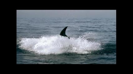 Monster Great White Shark Attack - Super Slow Motion!