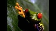 Bjork - Amphibian