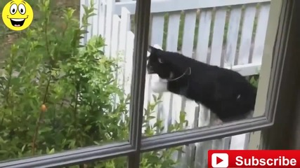 Смешни котета - Fail Compilation 2015