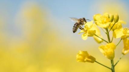 Интересни факти за пчелите