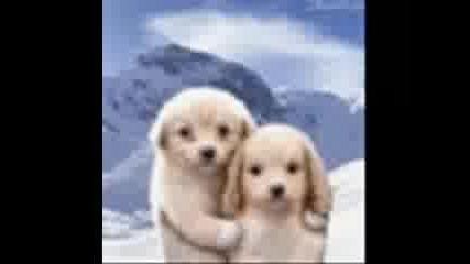 Сладки Животинки Кученца, Котенца И Зайчета