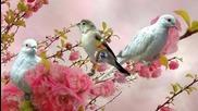 Пролет моя...