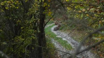 Стара речка - субару Аутбек - кален път в гората