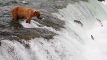Аляска - Uncharted Waters ..
