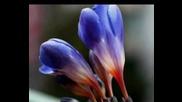 ~ O Floare Si Un Zambet ~pentru Toate Doamnele Si Domnisoarele~~sa fiti mereu iubite si fericite,dra