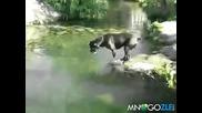 Най-добрия скок на куче