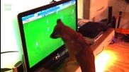 Смешни Котки и Кучета гледат Световната Купа по Футбол 2014