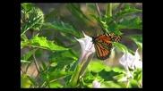 Релакс(butterfly)