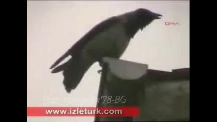 Невероятно!!!* - Гарванова Птица призовава (името) Аллах ...