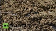 В Панама запалиха над девет тона кокаин и канабис