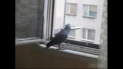 Папагалче Жако Си Говори.много Смях!!!