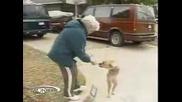 Най-Странното Куче!